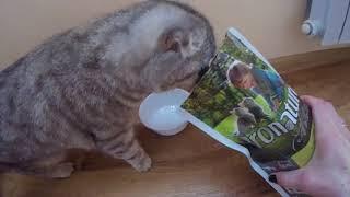 Кошка Хлоя Кушает Корм Pronature Holistic Kitten Chicken & Sweet Potato 😻 Лучший Корм для Котят