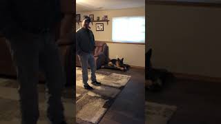 Carley service dog 1