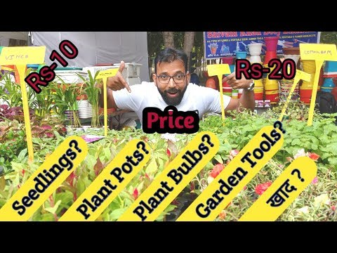 Wholesale Price Online Seedlings Plants, Herbs, Pots/ Planters, KHAD/Manure, Gardening Tools