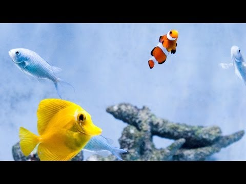 RELAX: NUVO 30 Saltwater fish tank with Clownfish, Yellow Tang, Green Chromis