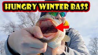 BFS Fishing Hungry Winter Bass