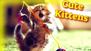Cute Kittens #2  Cute Cat Videos  Baby Cat