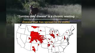 CDC Warns The  'Zombie Deer Disease' Could Spread To Humans