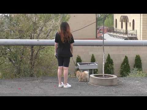 Ереван, Знакомство с Норком, 08.09.19, Su, Video-1.
