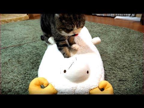 羊を癒すねこ。-Maru heals the sheep.-