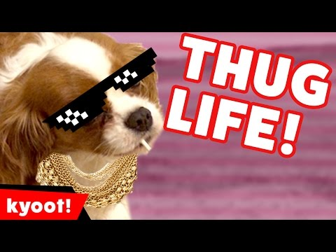 The Funniest Animal Thug Life Bloopers of 2016 Caught On Tape | Kyoot Animals