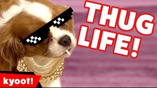 Video The Funniest Animal Thug Life Bloopers of 2016 Caught On Tape | Kyoot Animals download MP3, 3GP, MP4, WEBM, AVI, FLV Desember 2017