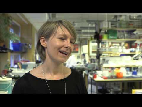 Stem cell transplants for Parkinson's disease edging closer