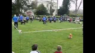 Bridport Dog Training Society Demonstration