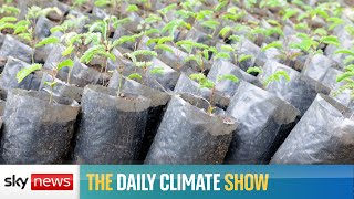 Is carbon offsetting a long-term solution?