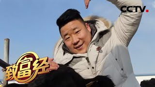 《致富经》 20200327 33岁小伙和他的12万头牛| CCTV农业