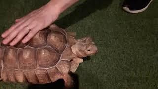 거북은 당근을 좋아해