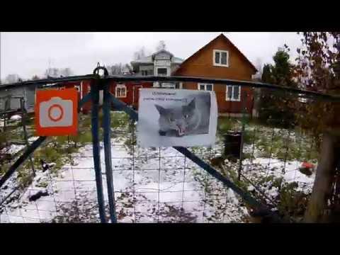 Смотреть Первый снегопад в СПб и бездомный кот Подкидыш. онлайн