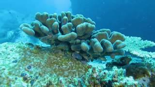 Как ООН борется с обесцвечиванием кораллов на Сейшелах