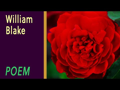 The Sick Rose by William Blake [VOICE]