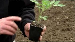 Tips On Growing Your Own Tomatoes