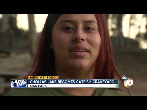 Concerns Raised Over Dead Fish At Chollas Lake