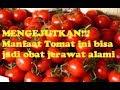 MENGEJUTKAN! manfaat tomat ini efektif jadi obat jerawat alami herbal