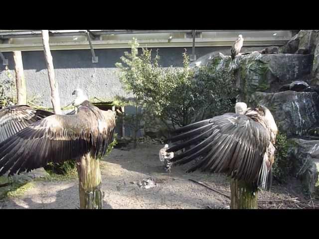 Artis, Amsterdam Zoo