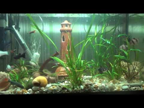 Аквариумные рыбки: на petcare. Ua можно купить разнообразных рыбок для аквариума по доступной цене. Большой выбор аквариумных растений. Продажа аквариумных рыб.