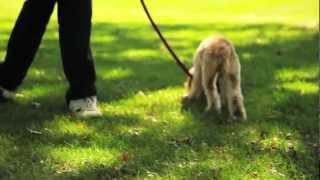 How Do I Get My Dog To Pee Outside - House Break Your Puppy By Trevor The Pet Guy