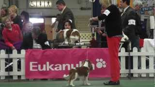 Kentuckiana Cluster Dog Shows - Cavalier King Charles Spaniel, 9-12 Month Puppy Dog - March 15,2013