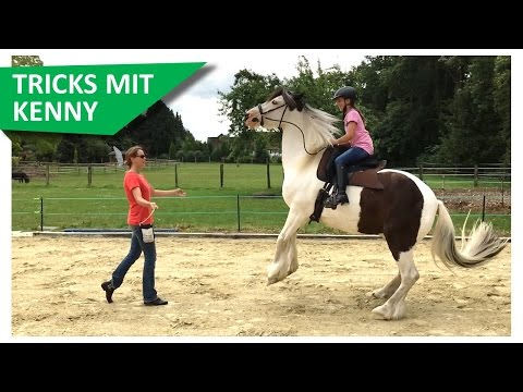Tolle Tricks bei Blindly Follow Horses - Teil 1