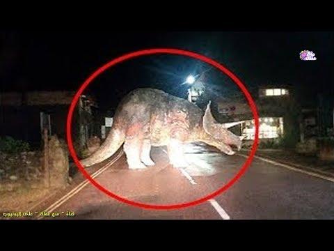 5 ديناصورات حقيقية رصدتها الكاميرات على أرض الواقع !!