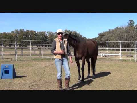 How to Round Pen Your Horse Correctly and Compassionately