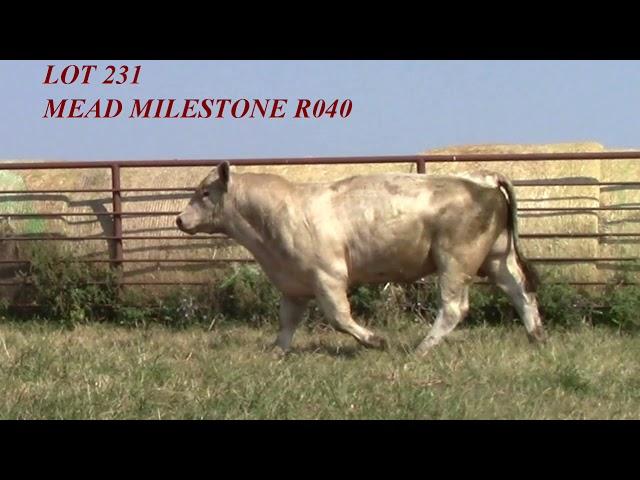 Mead Angus Lot 231