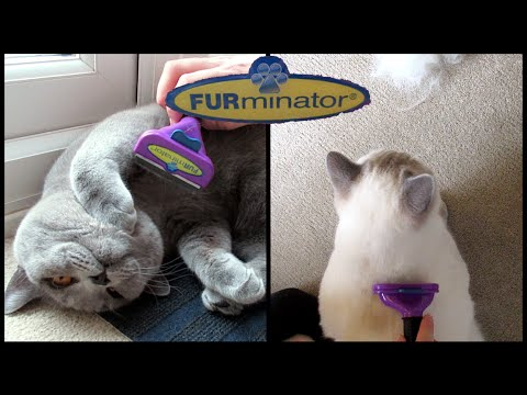 BRITISH SHORTHAIR FURMINATOR REVIEW | CHRIS & EVE
