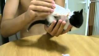 Смешные коты и кошки. Самый красивый котенок в мире!