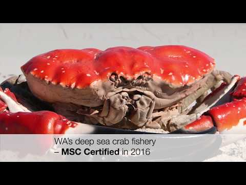 A Look At Western Australia's Sustainable MSC-certified Fisheries
