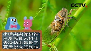 《道哥和摩尔》蝉都吃什么东西?| CCTV少儿