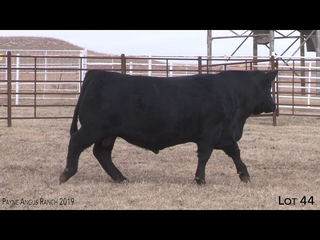Payne Angus Ranch Lot 44