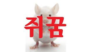 [해몽의신]쥐꿈 - 부자꿈,재물꿈, 로또꿈, 대박꿈, …