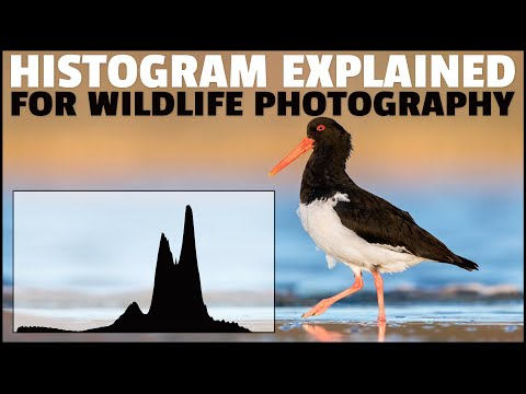 HISTOGRAM Explained For WILDLIFE Photography - How To READ Histograms For Correct Exposure