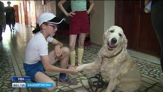 В Уфе начались съемки детского фильма «Душа Пирата» - главные роли в нем исполняют собаки