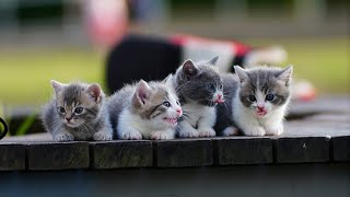 Cutest kitty in The world🌎 | Supper funniest pets | Animal Planet Ever #5