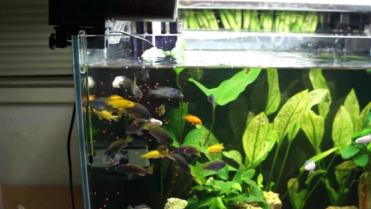 collections fish more feeder aqua aquarium eheim feeders automatic pets mate food