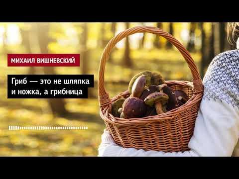 Михаил Вишневский: Гриб – это не шляпка и ножка, а грибница