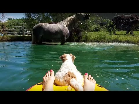 Woman, Dog & Horse Take A Dip In The Pond Together