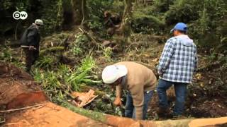 "Biodiversität Mexiko: ""Leben am Tacaná-Vulkan"" | Global 3000"