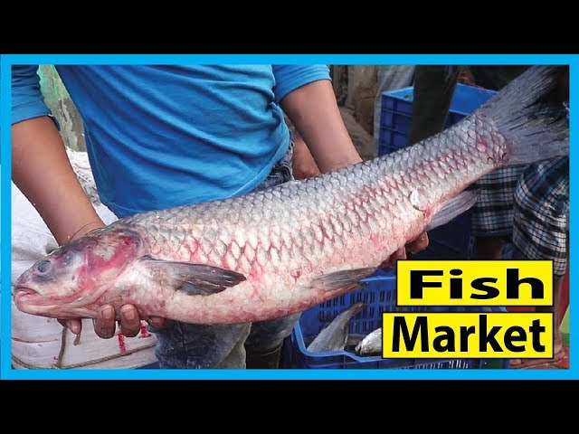 Incredible Biggest Fish Market | All Types Fish Available