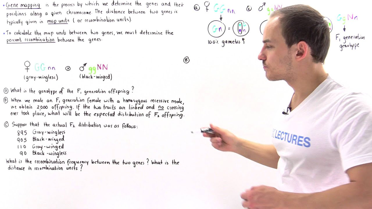 Gene Mapping, Percent Recombination and Map Units - YouTube on