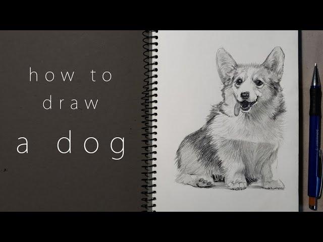 как нарисовать собаку how to draw a dog