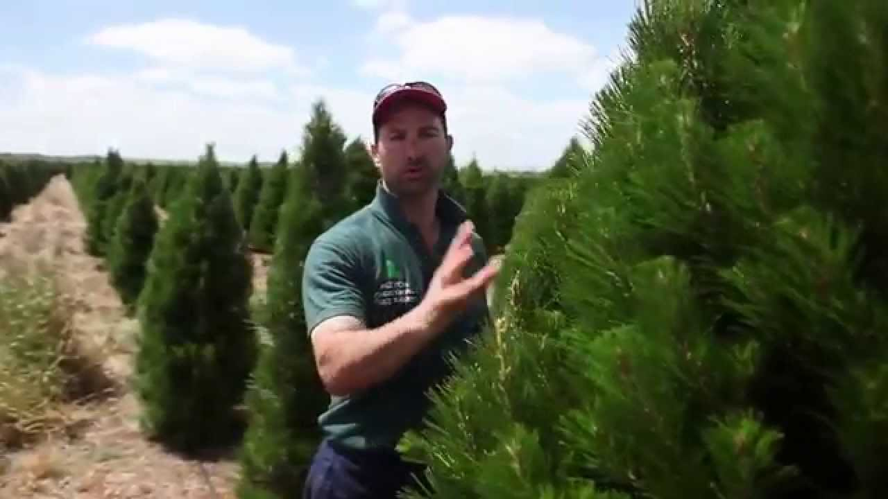 Melbourne Christmas Tree Farm