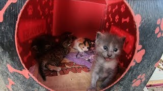 Hungry kittens waiting for their mom cat to come back home