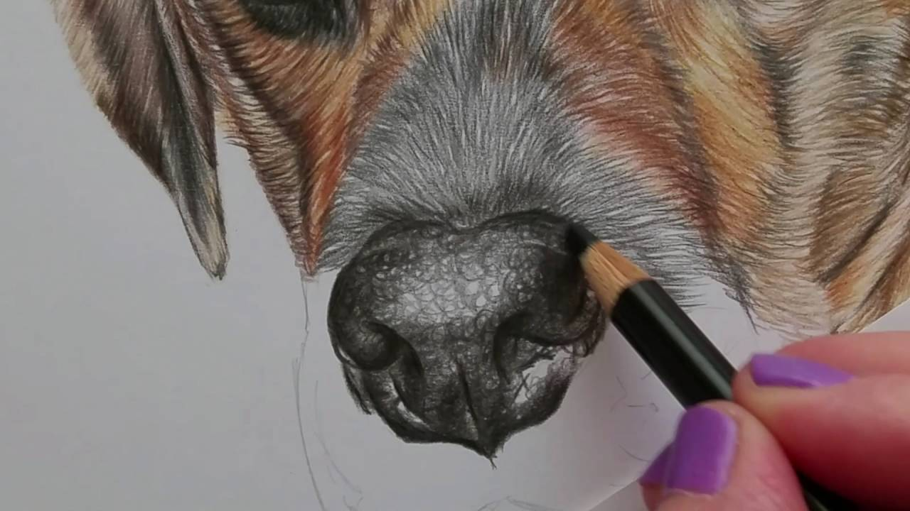 Drawing of nose tutorial coloured pencil partial time ...