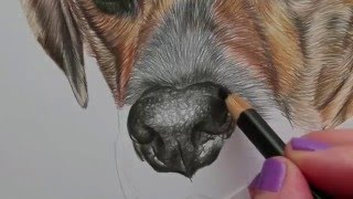 Drawing of nose tutorial coloured pencil partial time lapse